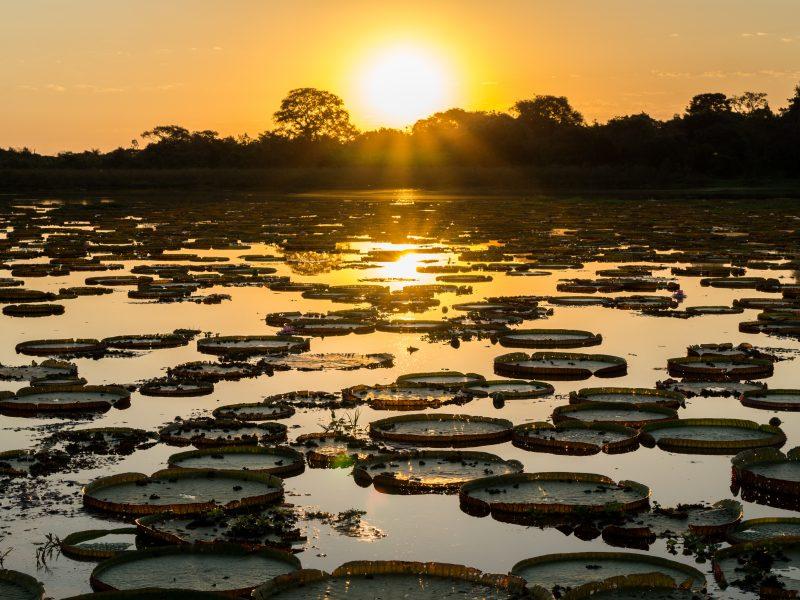 pantanal-800x600